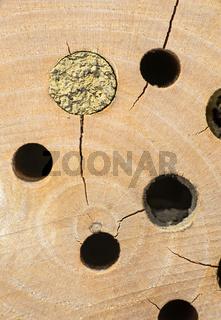 Bienenhotel, verschlossene Brutröhre einer künstlichen Nisthilfe