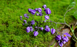 nature background, violet flowers, purple petal