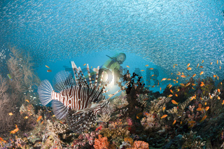Rotfeuerfisch an buntem Riff