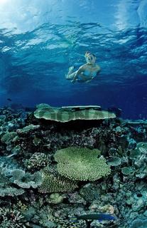 Schnorcheln an Korallenriff