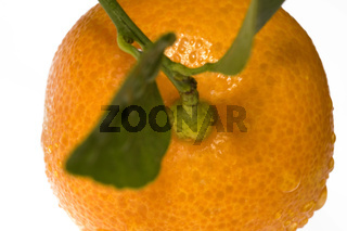 mandarin, calamondin