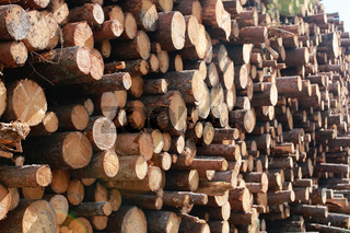 Long sawn logs lie on the pile