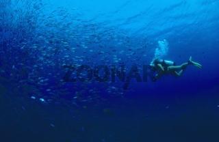 Taucher und Fischschwarm Stachelmakrelen (carangidae) in Tulamben, Bali, Indonesien