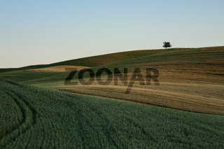 The lines of nature in Tuscan land