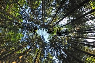 Blick nach oben im Hochwald