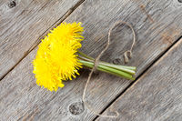 Dandelion tied with rope,top view