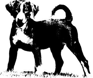 Appenzeller puppy - Illustration