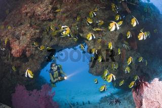 Masken-Wimpelfische und Taucher
