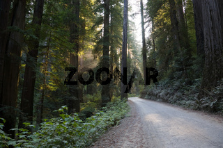 Road Redwood National Park