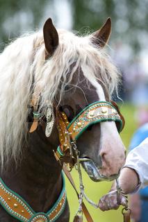 schön dekoriertes Pferd auf einer katholischen Wallfahrt in Bayern