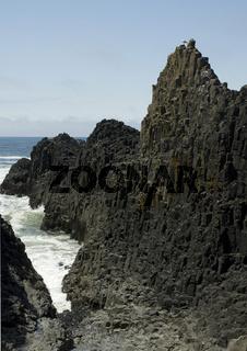 Basaltsäulen am Seal Rock State Beach, Oregon, USA