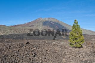 Samarra, Tenerife Island