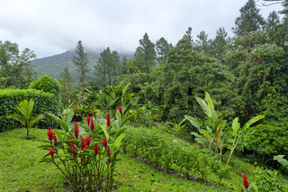 Red Ginger and Arenal Volcano, Costa Rica