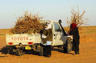 Beduinen beladen einen Jeep mit Feuerholz, Sahara
