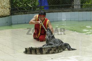 Siam-Krokodil, Krokodilshow