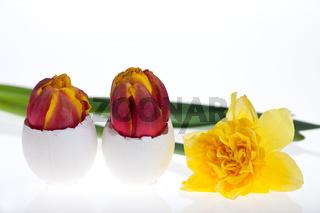 Ei und Narzissen im Frühjahr