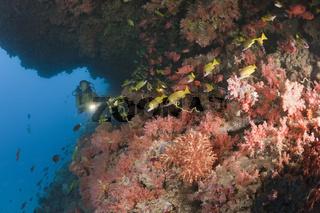 Taucher an buntem Korallenriff