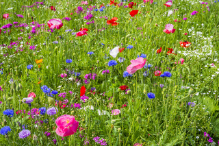 Colorful flowers in the green meadow