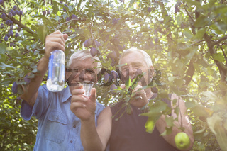 Happy seniors with alcohol under fruit trees