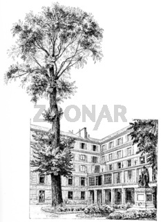 The elm and honor of the School of the Deaf and Dumb court, vintage engraving.