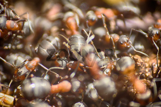 ants moving in anthill Marco