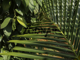Pfefferkörner neben einem Palmblatt