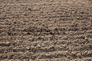 Feld eggen, Harrowing a field