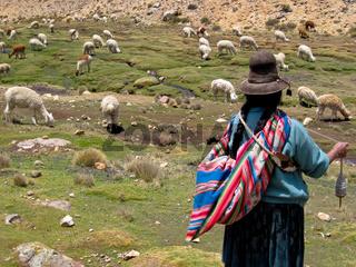 Lama Herde in Peru / Woman with Lamas