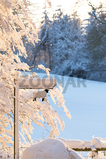A heavy blanket of snow covers a hillside field and bare winter trees with sheep farm sign.