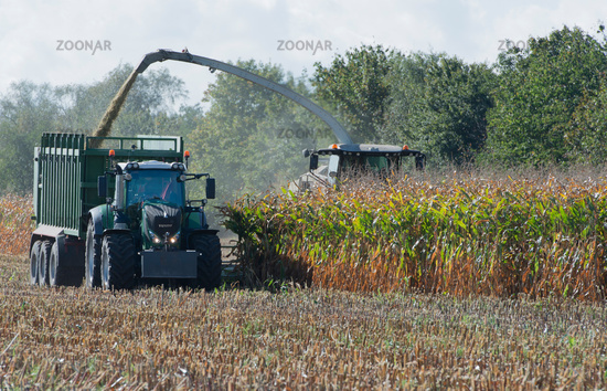 Maize harvester with tractor at the corn harvest