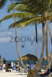 Sonnenbaden unter Palmen in Punta Cana, Dominicanische Republik (Cocos nucifera)