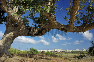 Wasteland near Ashkelon, Israel