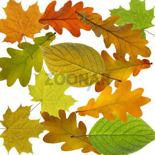 Colorful and bright background made of fallen autumn leaves.