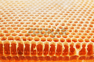Golden real honeycomb shot close up