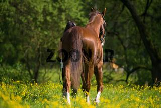 Pferd wird geführt