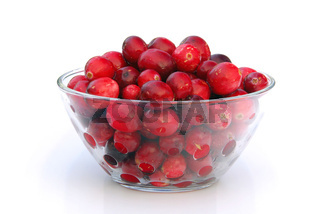Cranberry 06