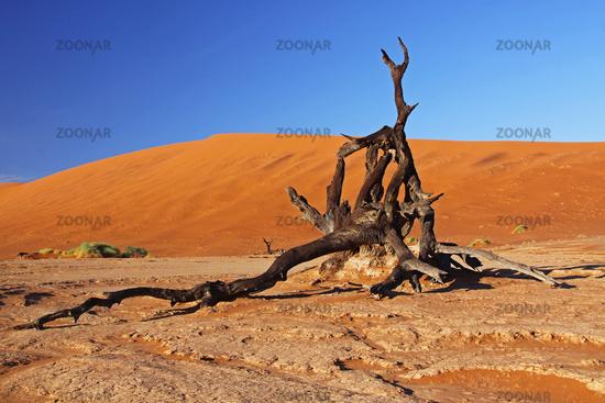 Dead Vlei, Namib-Desert, Namibia