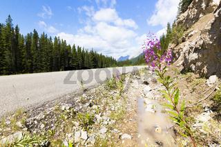 Road to morain lake british columbia canada