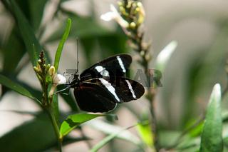 Schmetterlin an Blüte