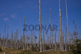Baumsterben, forest deaths