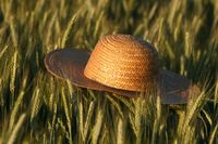 Straw hat in ryefield