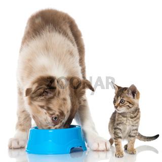 Hund und Katze mit Futternapf