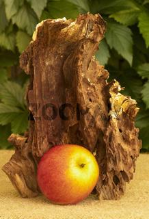 Wurzel mit Apfel