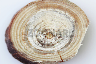 Macro texture of a wooden cut after sawing a twig with a circular saw.