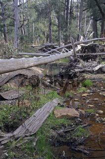 Wambelong River im Warrumbungle NP, Australien
