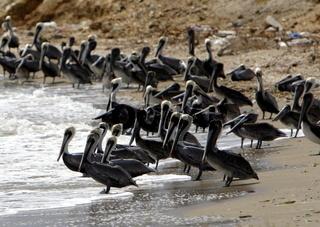 Palikane auf der Halbinsel Macanao auf der Insel Margarita im Norden von Venezuela in der Karibik.