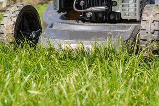 Rasen mit einem Rasenmäher mähen - Detailaufnahme