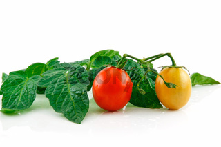 Ripe Wet Red Tomatoes with Leaves Isolated on White