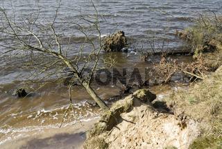 Entwurzelter Baum am Strand