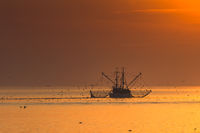 Trawler with dragnet fishing in the Wadden Sea at sunset